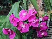 Orchidee spontanee (Ph: H. di Prisco © Mondointasca)