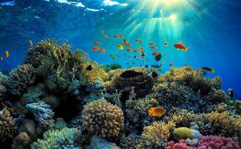 Nuova Caledonia Parco-del-mare-di-Corallo