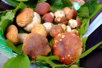 Cavrin di Coazze Val-Sangone-I-funghi