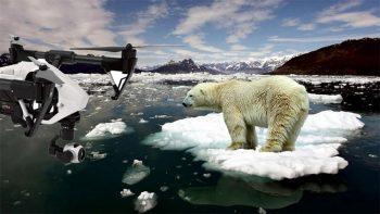 Drone e Orsi-Polari
