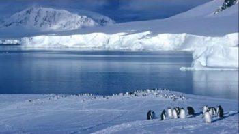 Drone pinguini