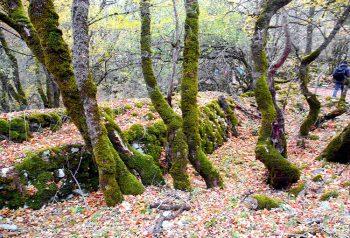 Civitella Alfedena Escursione-Aigae-Camosciara-2
