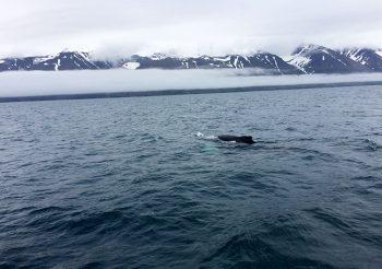 Islanda balene-mare-del-Nord