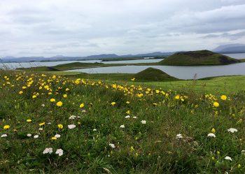Islanda prato-fiorito
